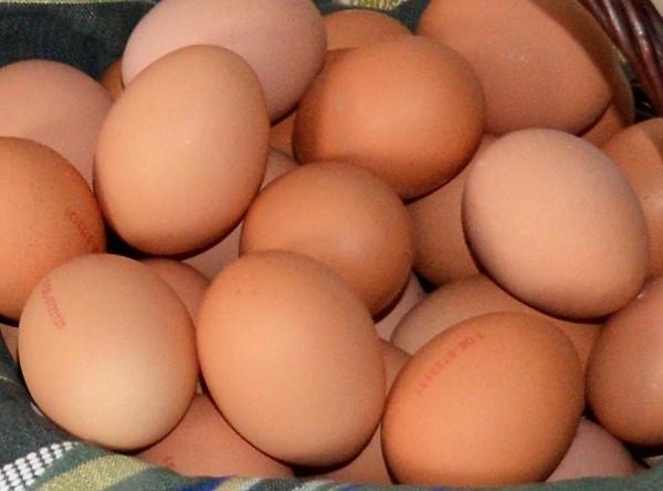 Eier Bodenhaltung (M)